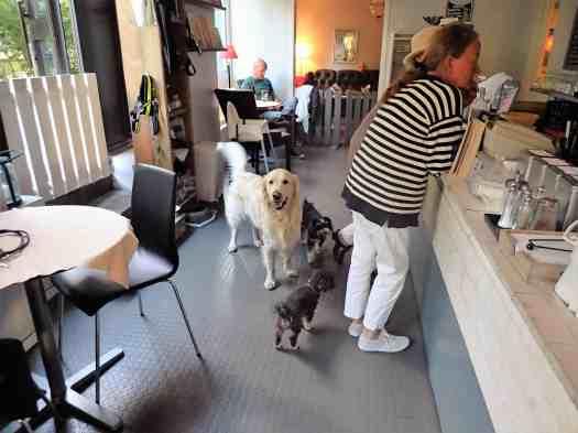 Sweden-stockholm-dogs-paradise (13)