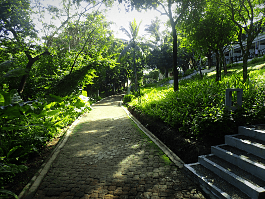 image-of-a-paved-path-in-palawan-philippines