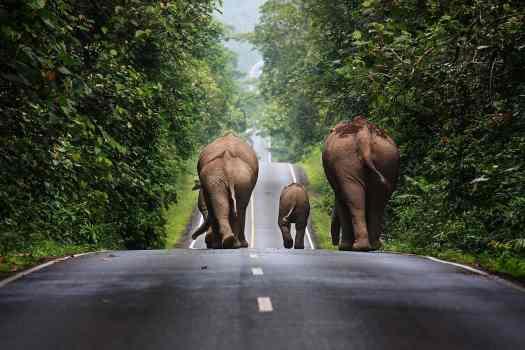 Thailand-khao-yai-national-park-elephants-credit-khunkay
