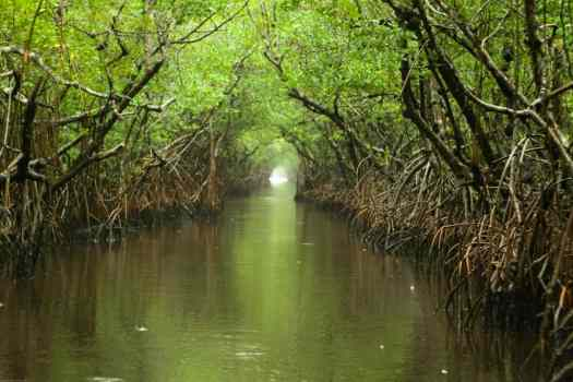 USA-Everglades_and_Turner_River_credit_chauncey-davis
