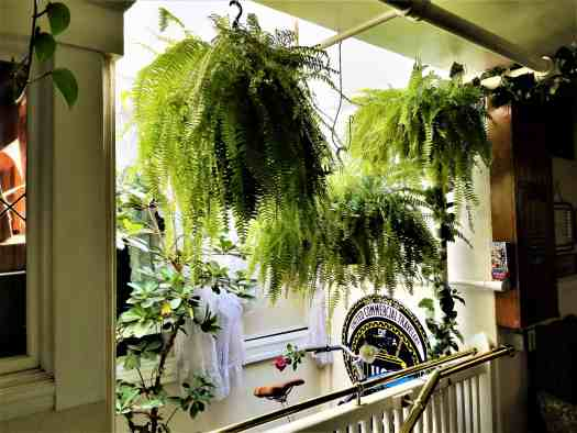 image-of-san-francisco-san-remo-hotel-stairwell