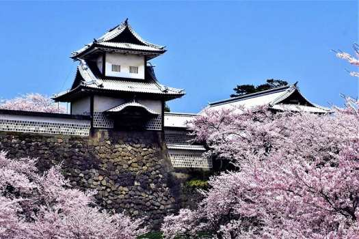 kanazawa-castle-surrounded-by-blooming-cherry-trees