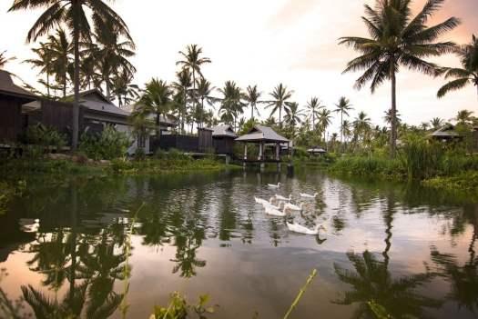 ducks-paddling-on-the-lagoon-