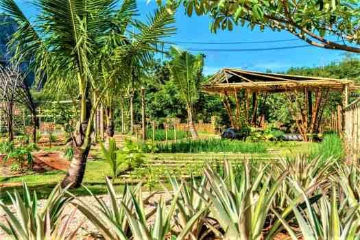 the-pavillions-anana-krabi-eco-farm