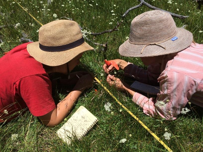 Meadow Monitoring Field Day — Volunteer Opportunity!