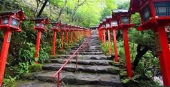 Japanese Red Pathway –alamy.com