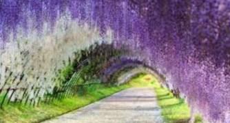 Purple Japan – pininterest.com