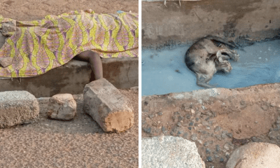 Man stoned to death for stealing cat in Tema