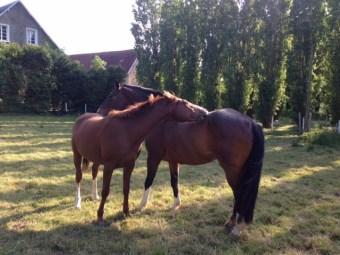 Paddocks à votre disposition pour votre cheval