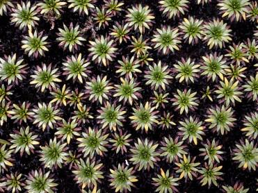 Alcina DeOliverira - Succulent Stars