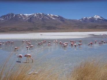 Ken Wong - Flamingos in Bolivia
