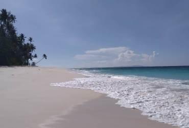 Pulau Sarang Aloe