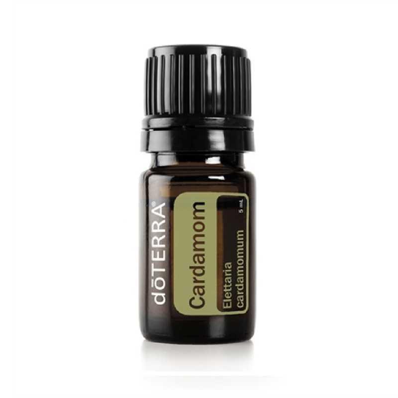 Cardamomo – Elettaria cardamomum – Cardamom