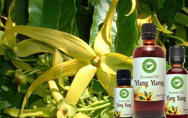 propiedades aceite esencial de ylang ylang