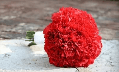 red-carnation-winter-wedding-bouquet