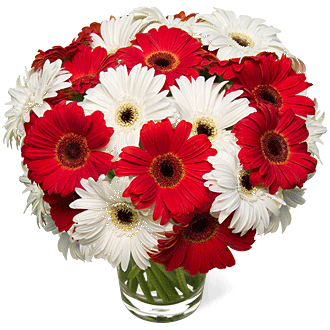 white-red-gerbera-daisies-wedding