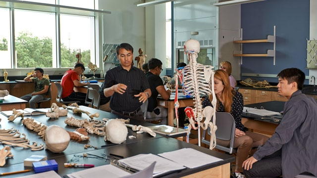 Students in anatomy & physiology  lab.