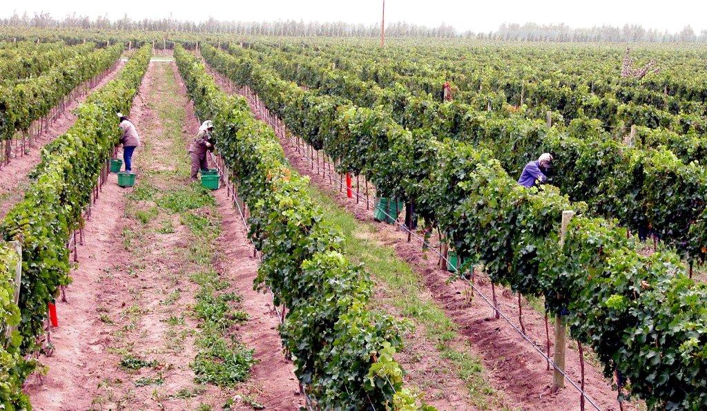 Patagonia entre viñedos