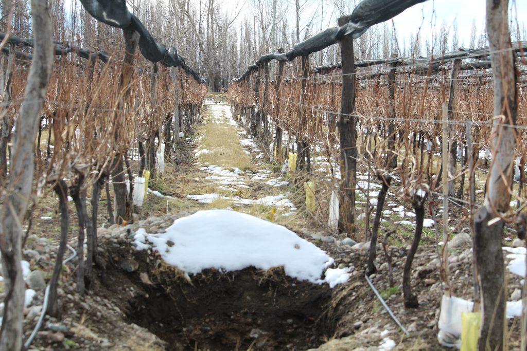 Nieve en los viñedos - Calicata nevada en la parcela Le Paradis de Domaine Nico - Gualtallary Alto - Tupungato
