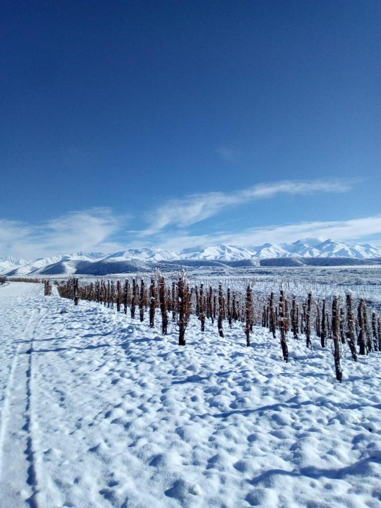 Nieve en los viñedos - Finca Las Cerrilladas (Zuccardi Wines) - Gualtallary - Tupungato (Foto: Sebastián Zuccardi)