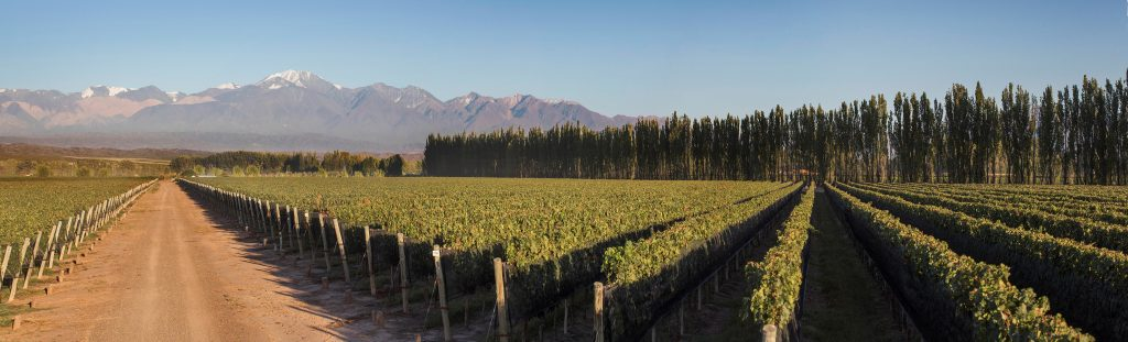 Chakana viñedos