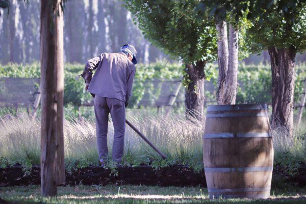 Chakana teje redes para una viticultura del futuro