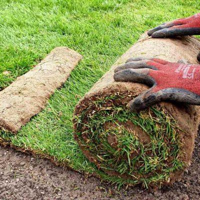 rozwijanie rolki trawy