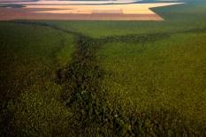 Grandes plantações de soja, milho e algodão cercam o Parque Indígena do Xingu (PIX) . Habitados pelas etnias Aweti, Ikpeng, Kaiabi, Kalapalo, Kamaiurá, Kĩsêdjê, Kuikuro, Matipu, Mehinako, Nahukuá, Naruvotu, Wauja, Tapayuna, Trumai, Yudja, Yawalapiti, o parque ocupa área de 2.642.003 hectares na região nordeste do Estado do Mato Grosso, De acordo com o IMEA - Instituto Mato-Grossense de Economia Agropecuária declarou último dia 7 de agosto de 2015 no informativo 365 divulgou dados novos das safras de soja em MT com a safra 14/15 consolidando-se com mais um ano de área e produção recordes. Por meio do método de Sensoriamento Remoto a nova área de 9,01 milhões de hectares apresenta-se 6,8% acima da área da safra 13/14. A produtividade já consolidada de 51,9 sc/ha elevou a produção para 28,08 milhões de toneladas. Os novos dados da safra 15/16 aumentaram ainda mais a expectativa de safra recorde já esperada no último relatório. A nova área de 9,2 milhões de hectares baseia-se na conversão de área de pastagem em agricultura observada há algumas safras. A continuidade de investimento em tecnologia da nova safra eleva a projeção de produtividade para 52,6 sc/ha, refletindo sobre a produção que deve bater um novo recorde em 2016, de 29 milhões de toneladas. Apesar do crescimento contínuo, a nova temporada deve atingir o menor avanço da produção desde a safra 10/11. Querência, Mato Grosso, Brasil. Foto Paulo Santos 24/07/2015