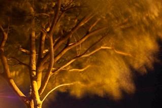 Mosqueiro. Foto Carlos Barreto Reprodução proibida