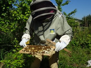 Bees and neonicotinoids: rapid action on the environment