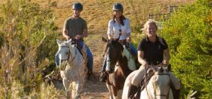 GD horses