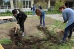 preparación del terreno_cavando zanjas