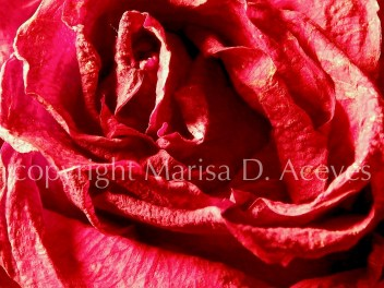 Abstract Nature- Old Rose