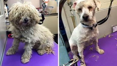Photo of Homem muda o visual de cães de abrigo para ajudá-los a serem adotados