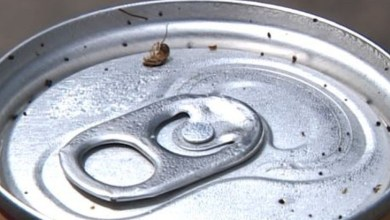 Photo of Análise em laboratório encontra até 45 mil bactérias e 9,7 mil fungos em latinha de bebida