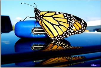 Butterfliipod