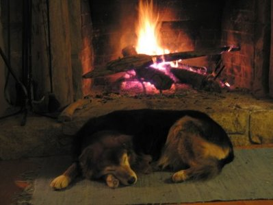 A_long_winters_nap