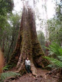 Big Tree Little Man