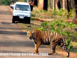 बांधवगढ राष्ट्रीय उद्यान के बारे में जानकारी Bandhavgarh National Park in Hindi