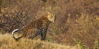रणथंभौर राष्ट्रीय पार्क के बारे में जानकारी Ranthambore National Park in Hindi