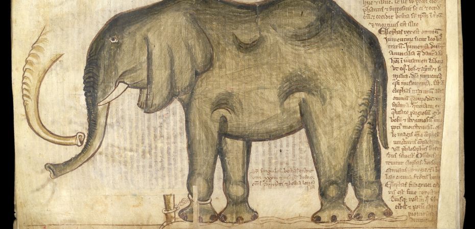 Manuscript depicting an elephant