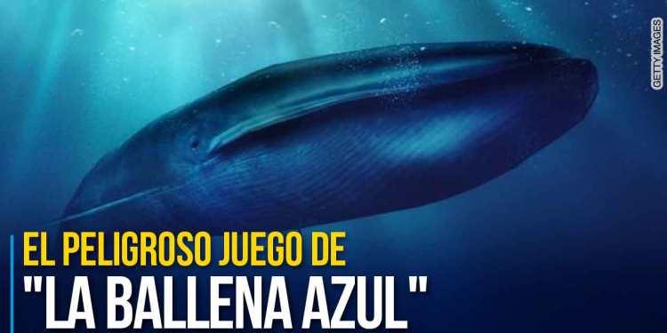 El nombre del juego hace referencia a los suicidios colectivos de algunas ballenas, que buscan la orilla para encontrar la muerte.