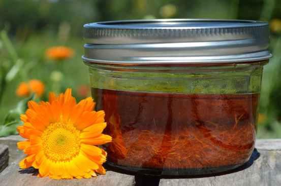 Calendula oil close up