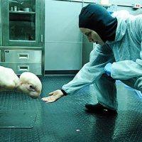 Teoria da Conspiração: Animais híbridos humano-animais já estão sendo criados em laboratórios de todo o planeta
