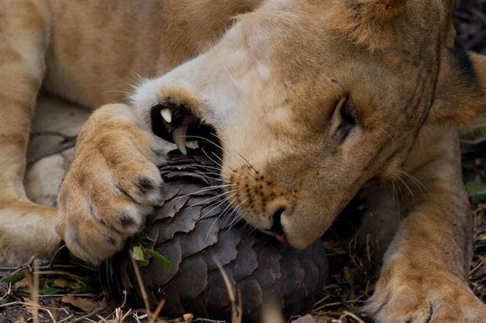animal_photos_20.jpg