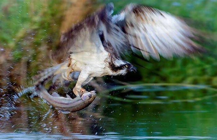 animal_photos_23.jpg
