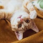 Kedi ve köpek tüylerine karşı alerjiniz varsa bunlara dikkat edin