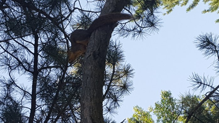 """Our"" squirrel took refuge at the top of the tree during the eclipse."