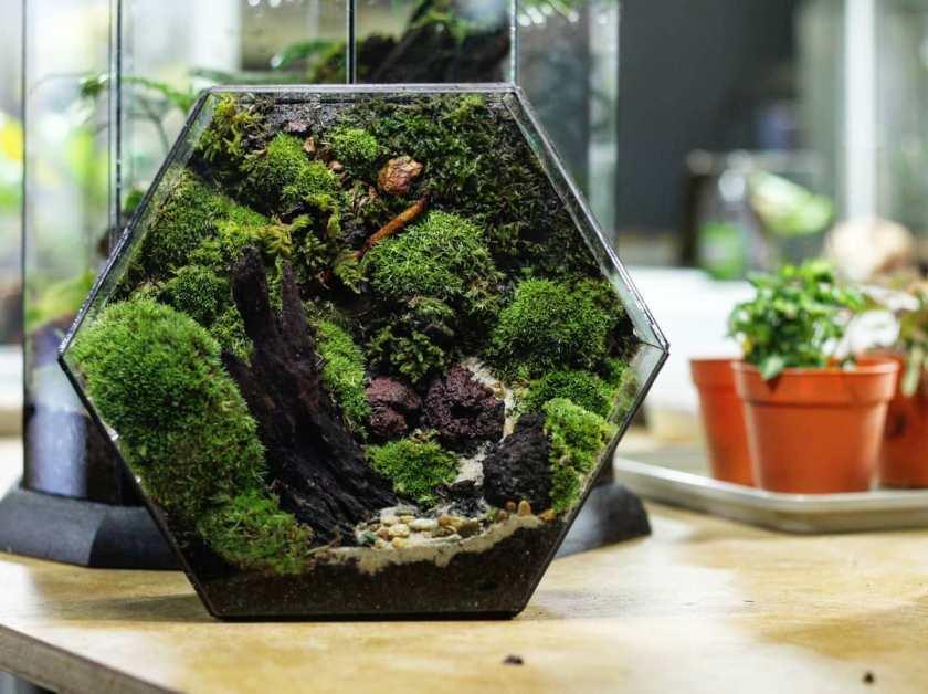 Moss Terrarium Ideas exo terrarium