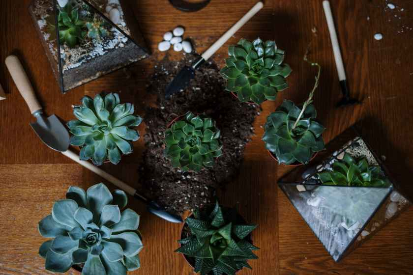 green succulent plant on brown wooden table